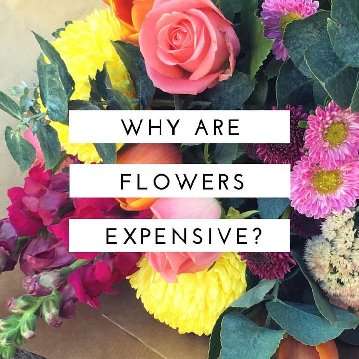 Hunting Blooms looks at why flowers are 'so expensive' (spoiler alert... they actually aren't!!)