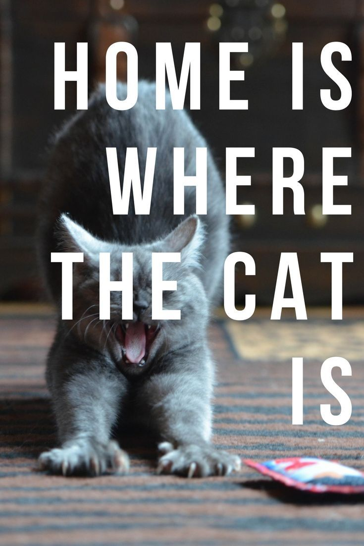 Home is where the cat is. Cute quote and cute cat
