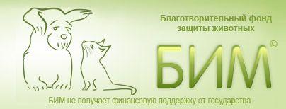 Как и чем правильно кормить котят и кошек
