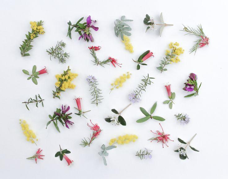 Foraged Australian wildflowers