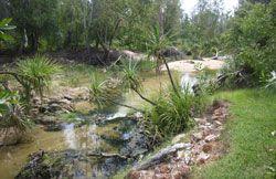 Image of Tjuwaliyn (Douglas) Hot Springs