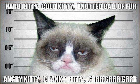 BBT Meets Grumpy Kitty