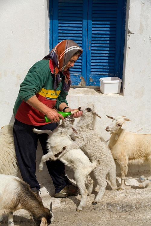Woman and goats. Ano Sagri. Naxos island. Cyclades islands, Aegean Sea Greece