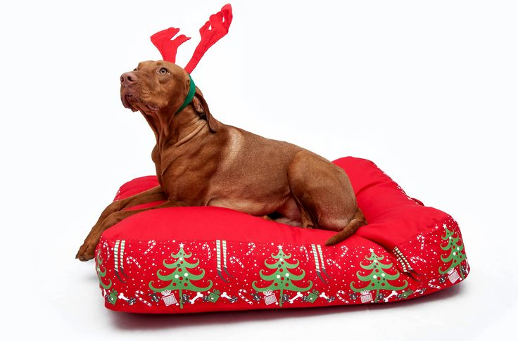Winter Collection Dog Bed http://petbag.hu/