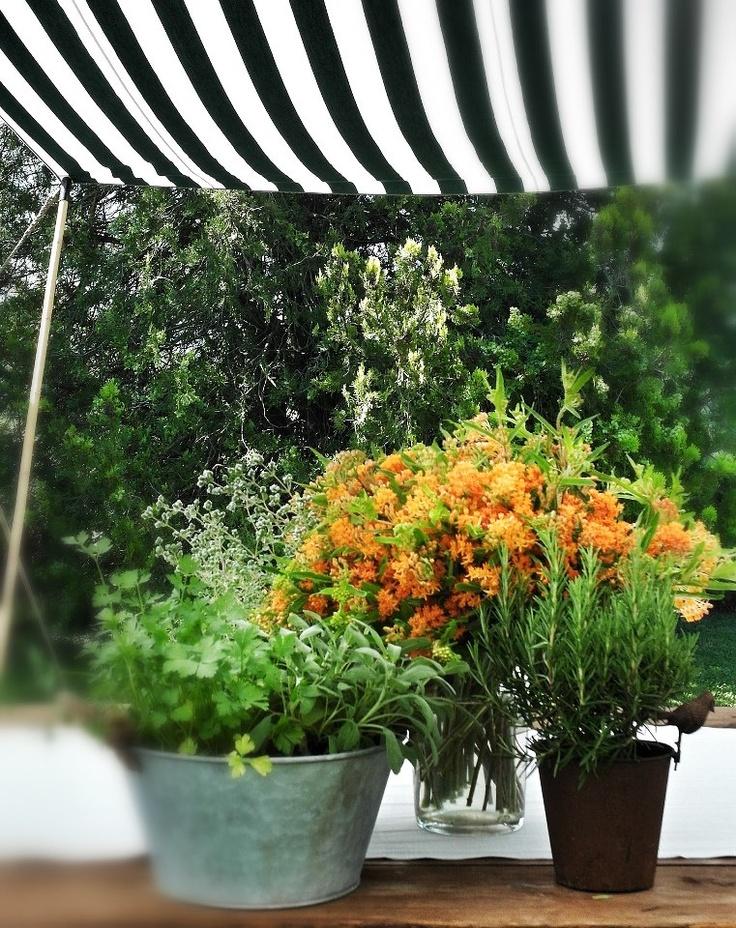 buffet table. La Rosa Canina FIRENZE www.larosacaninafioristi.it