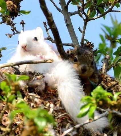 White color squirrel