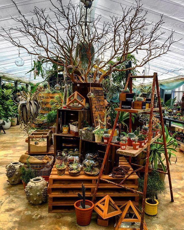 67 best Work Displays images on Pinterest | Garden centre ...
