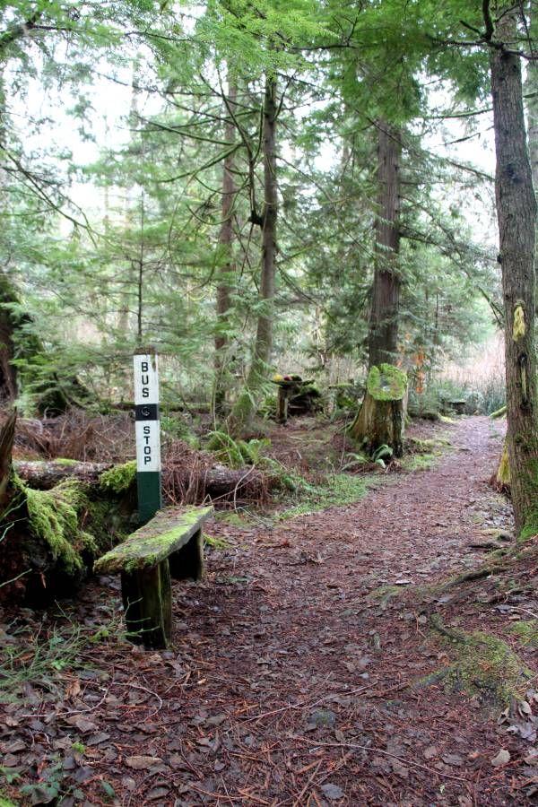Wacky Woods Fanny Bay