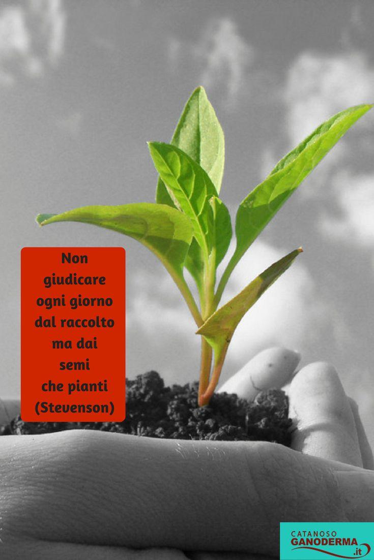 """La domanda che ogni giorno devi farti non è """"cosa ho raccolto oggi"""". La domanda che devi farti è """"cosa ho seminato oggi ?"""". Condividi?"""