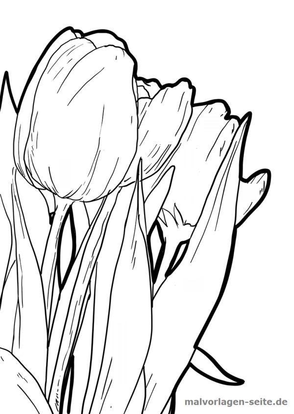 malvorlage tulpen  pflanzen  malvorlagen tulpen vorlagen