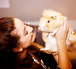 aww...Zoe and her Guinea pigs...(Pippin or Percy)