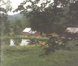 An Earth Pond Maintenance Guide - Modern Homesteading - MOTHER EARTH NEWS