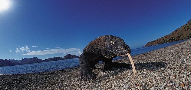 Komodo dragons are all purpose killing machines. Story here: http://j.mp/WYQaJL
