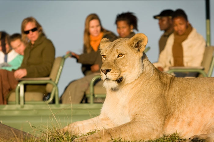 Plettenberg Bay Game Reserve Garden Route coastline Game drive bush wedding horse safari for family holiday