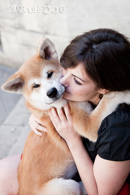 true dog photographe animaux de compagnie chien akita inu (14)