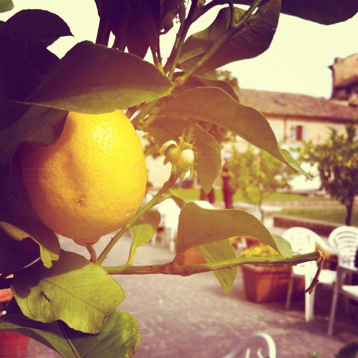 Lemon Tree. In the town square. Servigliano, Italy as seen from the Cafe in Piazza Roma. A lovely spot to take the sun and enjoy La Bella Vita!  Stay at www.villa-miramonti.com