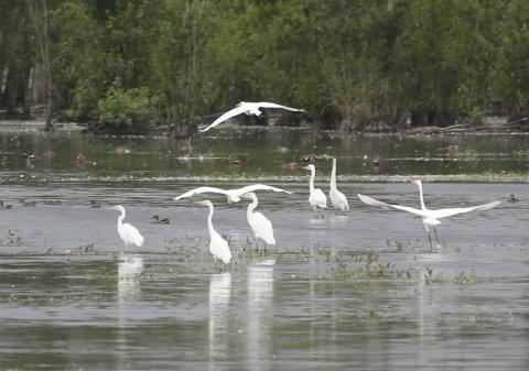 Silberreiher im #Naturpark Mecklenburgische Schweiz Foto: Naturpark #meckpomm #natur #vogel #entdecken #seenplatte