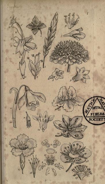 Botanical via Flickr.