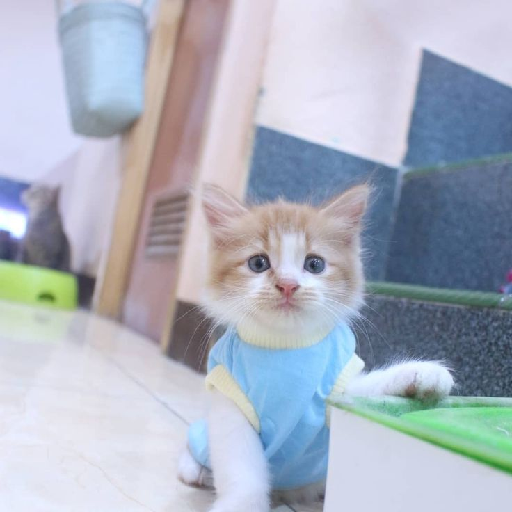 Baju Kucing Shopee