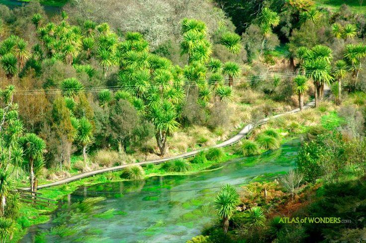Te Waihou river