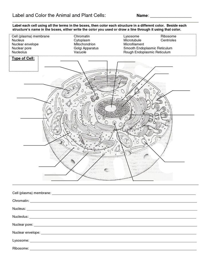 Printable Cell Worksheets Labeling A Cell Worksheet in