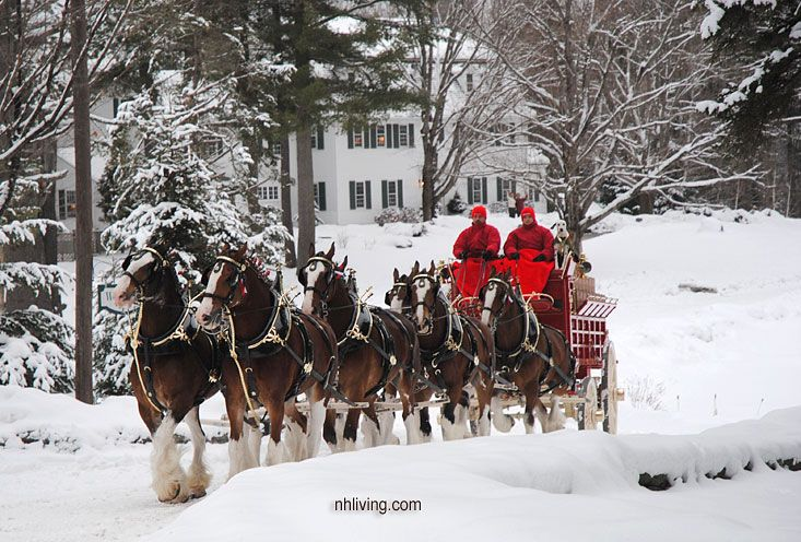 budweiser clydesdales winter budweiser clydesdale photos
