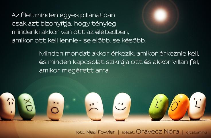 A hét idézete március utolsó hetében Oravecz Nóra Fűszerespolc című blogjáról.