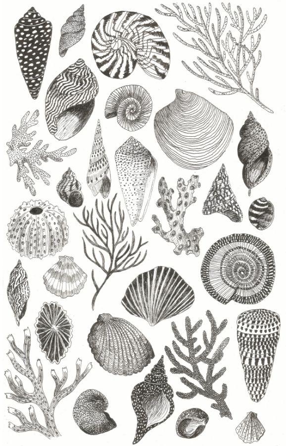 Caitlin Foster Shells poster, 2015