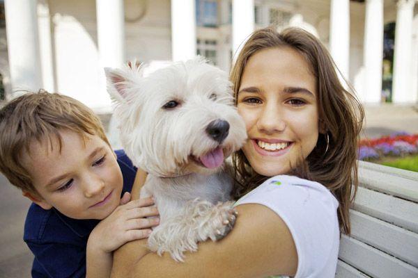 Separamos uma lista com mais de 50 frases de cachorros pra você se inspirar e alegrar seu coração. Frases sobre o amor e a amizade dos cães.