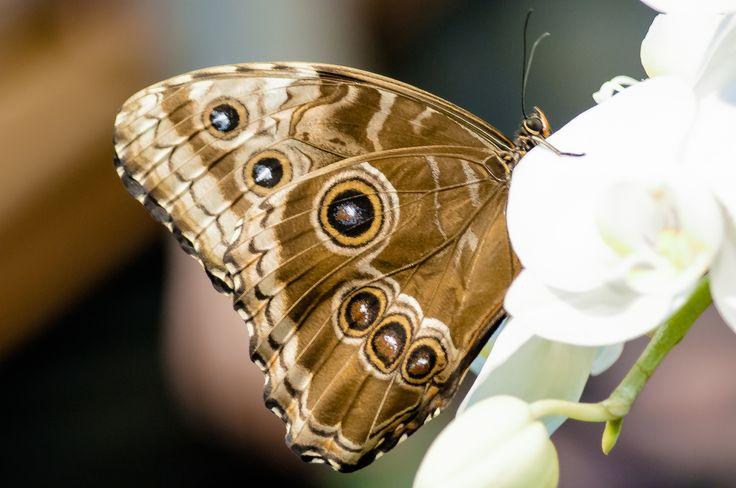 the butterfly by Graziella Serra Art & Photo on 500px
