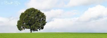 Eenzame boom henk