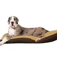 #dogalize Razas de Perros: Dogo Aleman caracteristicas y cuidados #dogs #cats #pets