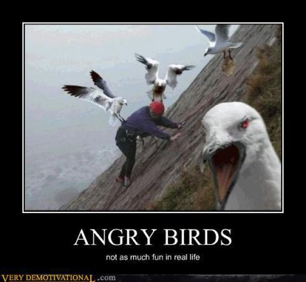 Angry Birds. Not so much fun in real life. hahaha: Birds Sayings, Hammocks, Demotivational Posters, Gangsters, Funny Nightmare, Birds Humor, Hate Birds, Real Angry, Angry Birds