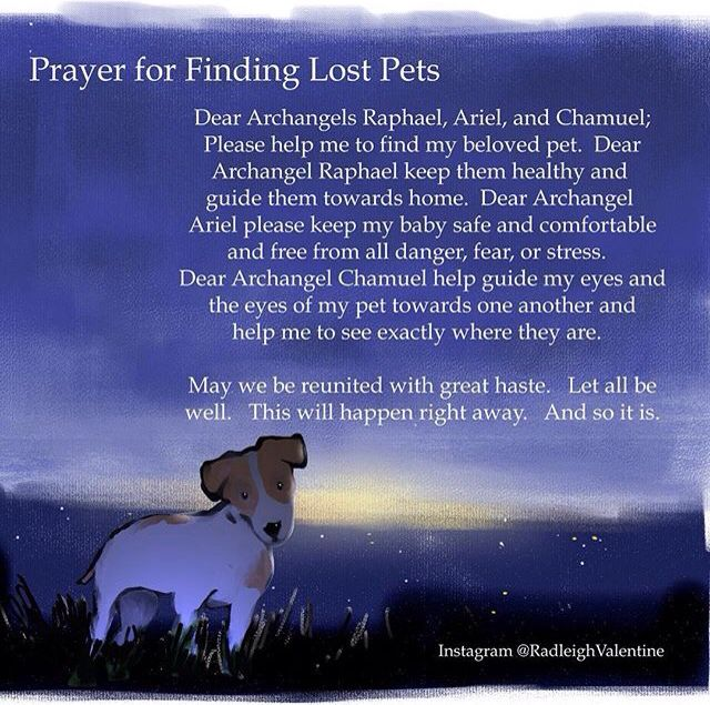 Prayer for lost pets
