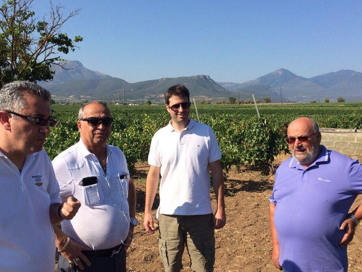 From our visit to Nikolaou Estate, Nemea #nemea #winetasting #greeksumer