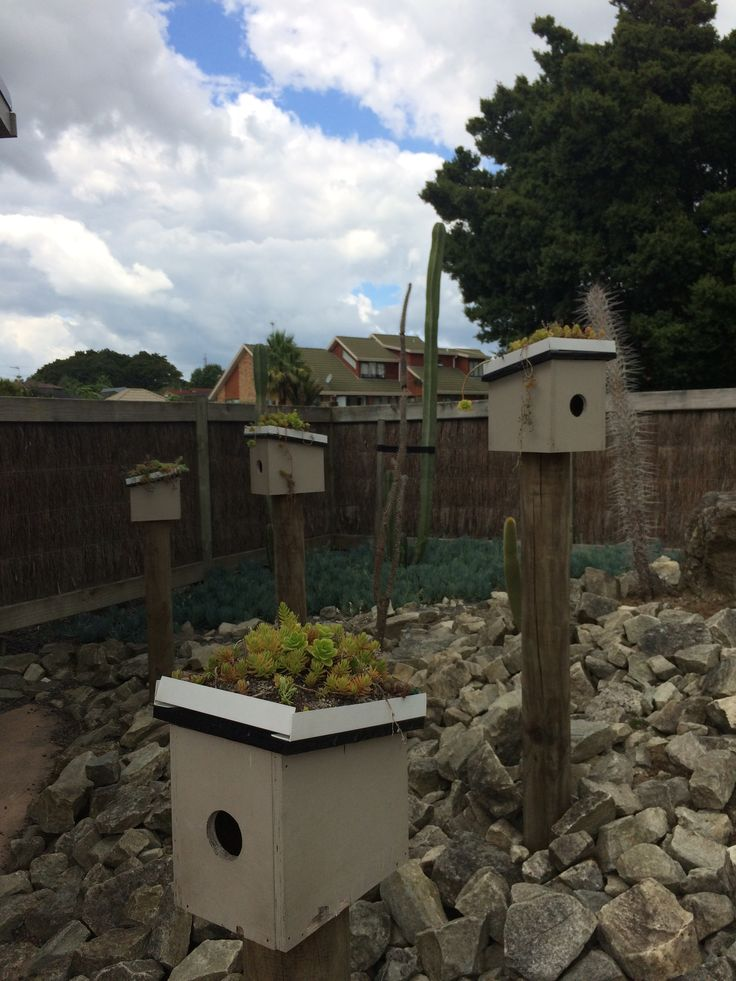 Bird houses with green roofs!!