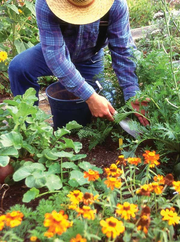 Natural weed control: Using a variety of techniques, including a good garden plan, mulch, landscape fabric, hoeing and more, natural weed control is possible.