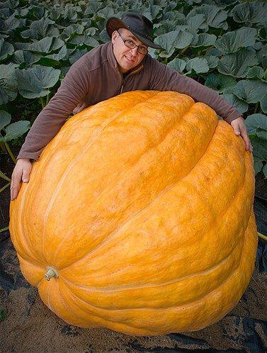 Giant pumpkin | Patrick Pleul, Corbis
