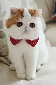 """hola amigos, en esta ocasión les dejo un top de gatos que en lo personal son unos de los gatos mas hermosos que hay, 10 gatos que son verdaderamente muy bonitos solo hay que ver las imágenes de gatos que les dejo y verán que son maravillosos. Una recopilación de estos magníficos animalitos que son toda una sensación mas para los que somos amantes de los gatos, 10 Gatos Mas Bonitos Del Mundo espero sean de su agrado. """"10 Gatos Mas Bonitos Del Mundo"""" """"Gato Bengala"""" """"Gato Caracal"""" """"Gato De…"""