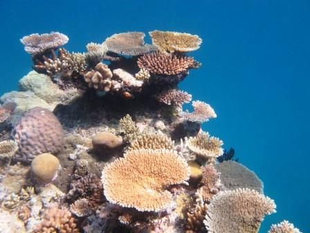 Macquarie scientists help develop coral reef database - With the future of coral reefs threatened now more than ever, researchers have announced the release of a new global database that enables scientists and managers to more quickly and effectively help corals survive their many challenges.