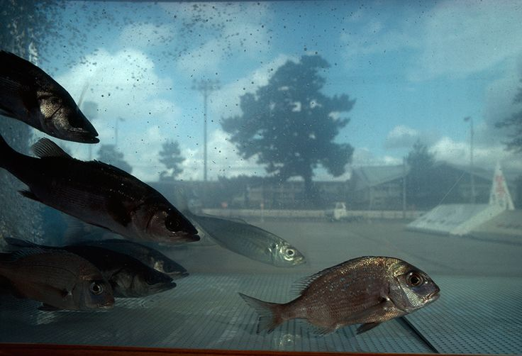 View of the Hagi city landscape through a fish aquarium in Japan, 1980. PHOTOGRAPH BY SAM ABELL, NATIONAL GEOGRAPHIC CREATIVE