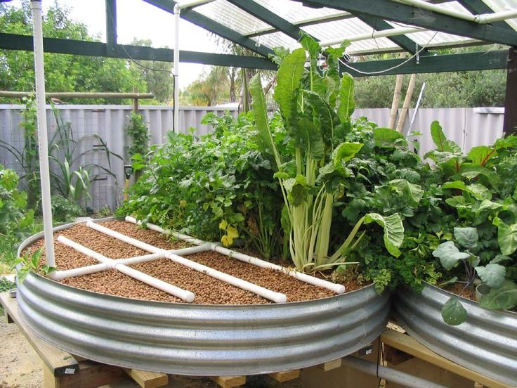 11 Aquaponics systems that you can build to feed your family high quality protein and vegetables. Get started today!