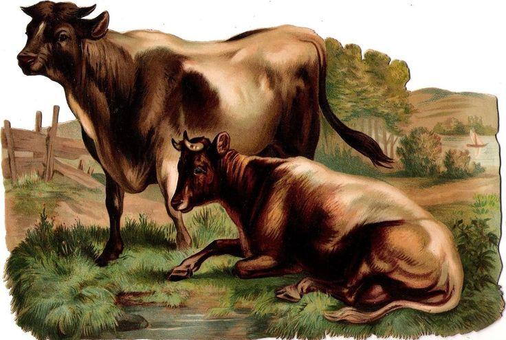 Oblaten Glanzbild scrap die cut chromo Kuh cow  XL 24cm vache landscape Wiese: