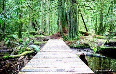 Lisarey Photography - Elder Cedar Forest