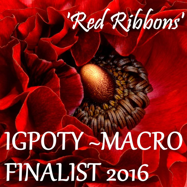 Honoured to be a finalist in the IGPOTY Macro 2016 Competition