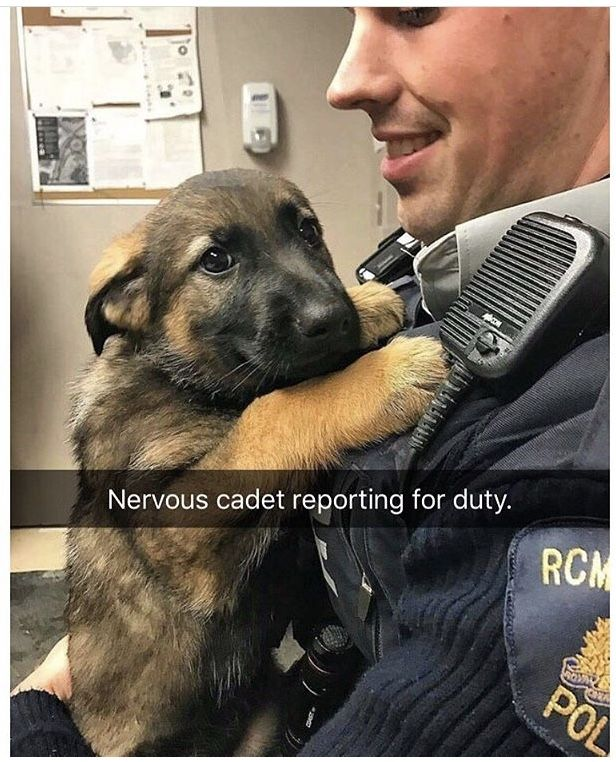 A Cute Police Officer And A Cute Helper Dog Cute Animals Cute