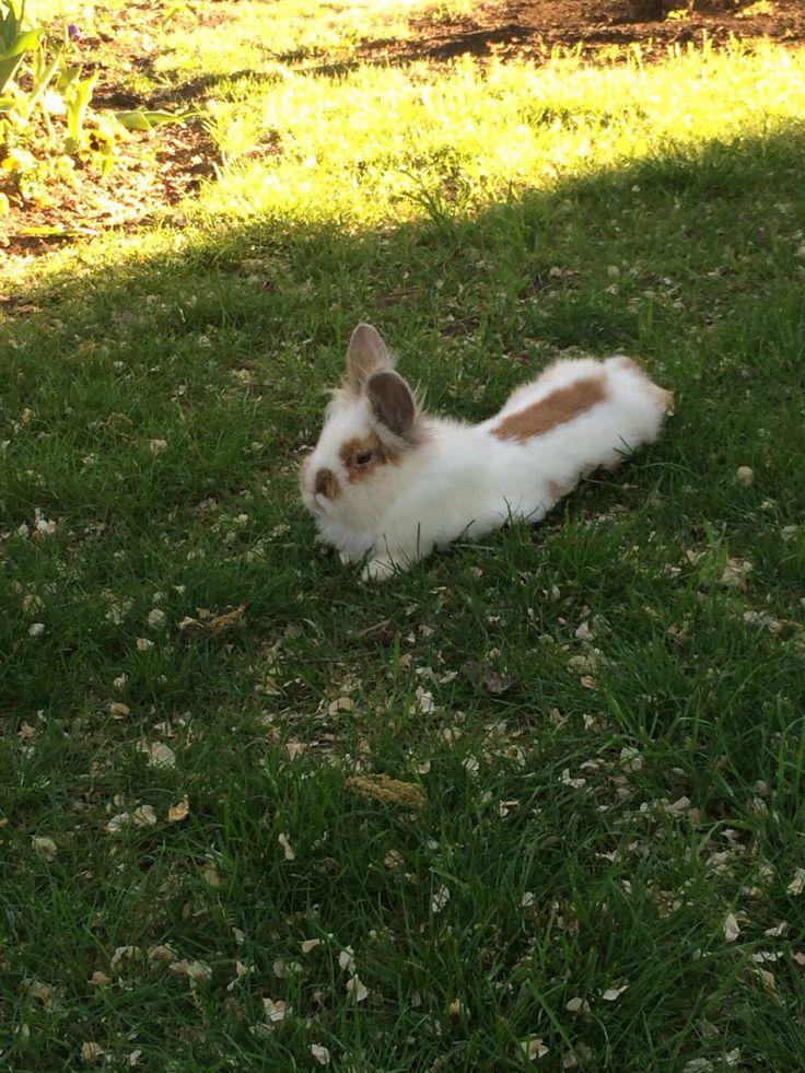 Little rabbit for entertainment offers/ кролик для развлечения гостей