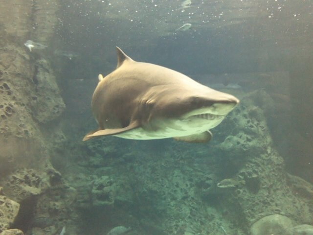 Cretaquarium - Crete - Greece - Shark