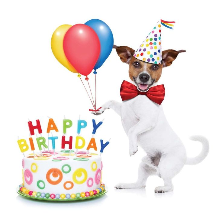Happy Birthday Card - Jack Russell Puppy Dog Cake & Balloons & FREE 1st Post!