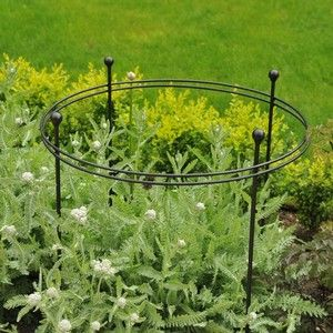 Harrod Short Circular Plant Supports are perfect for showy heads, preventing stems from being snapped by the wind or flopping under their own weight http://www.harrodhorticultural.com/harrod-short-circular-plant-supports-pid9243.html
